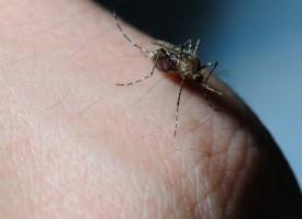 Medidas barrera para prevenir enfermedades transmitidas por vectores