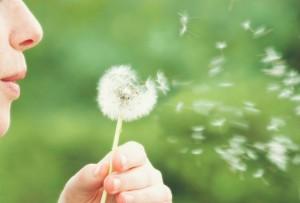 alergias polen flor flores plantas (1)