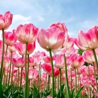 La primavera y el polen, una explosión de vida y color