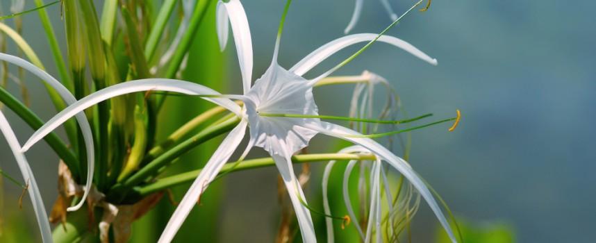 Plantas de interior para purificar el aire de tu casa