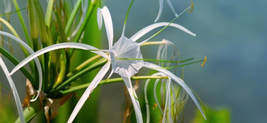 Plantas de interior para purificar el aire de tu casa - Plantas de interior que purifican el aire ...
