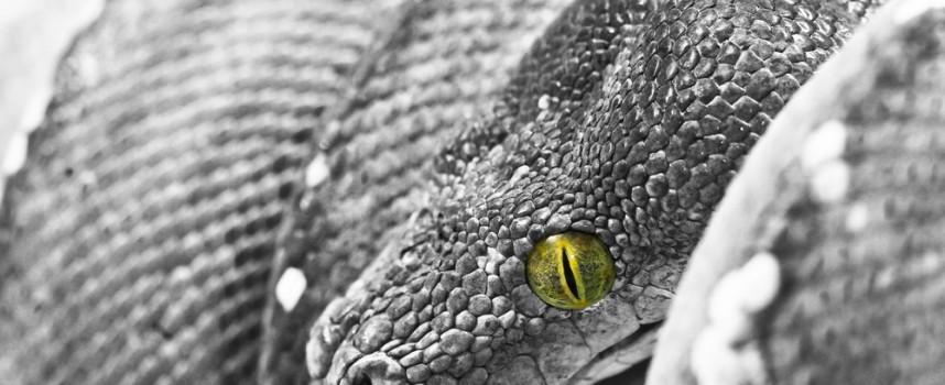 En viajes y excursiones, cuidado con las picaduras de serpiente