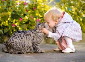 Aumentan las alergias a los animales