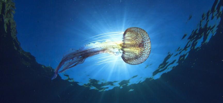 Me ha picado una medusa, ¿qué hago?..