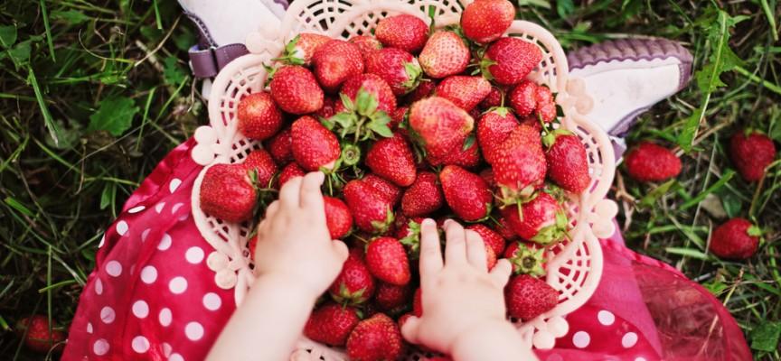 Grandes razones para comer fresas