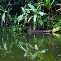 Enfermedad de Chagas: una vuelta anunciada