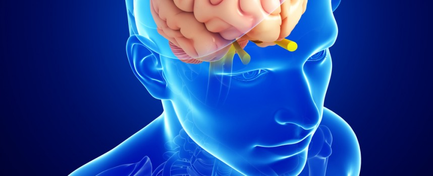 Cómo funciona cerebro y qué partes lo forman