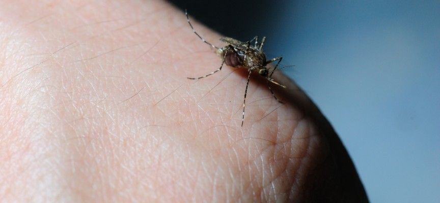 Virus Zika y mosquito Tigre, un peligro en aumento