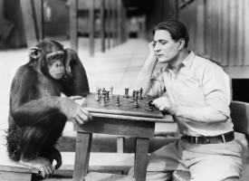 Humano y chimpancé comparten el 99% del ADN
