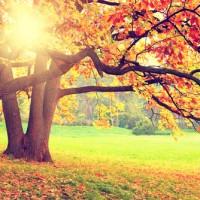 ¿A qué se deben los colores del otoño?