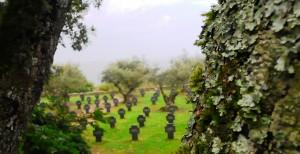 cementerioaleman