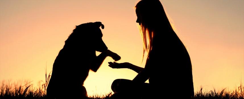 Terapia Asistida con Perros para la discapacidad intelectual