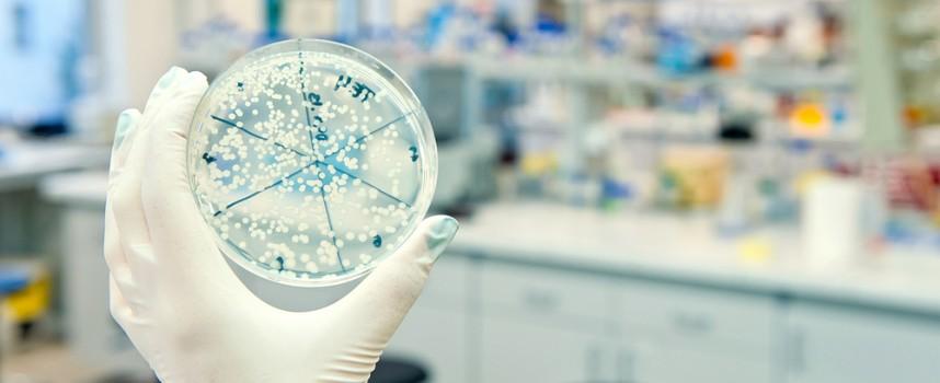 Las bacterias, esas pequeñas compañeras