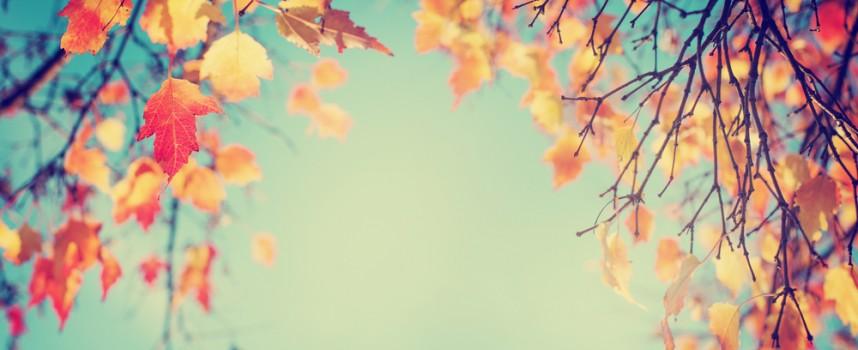 El sol del otoño también perjudica a nuestros ojos