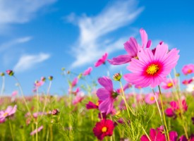 42. ¿Por qué salen las flores en primavera?