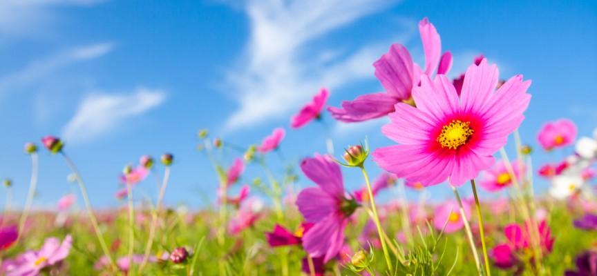 42 por qu salen las flores en primavera knowi - Plantas de temporada primavera ...