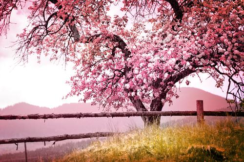 42 Por qu salen las flores en primavera Knowi