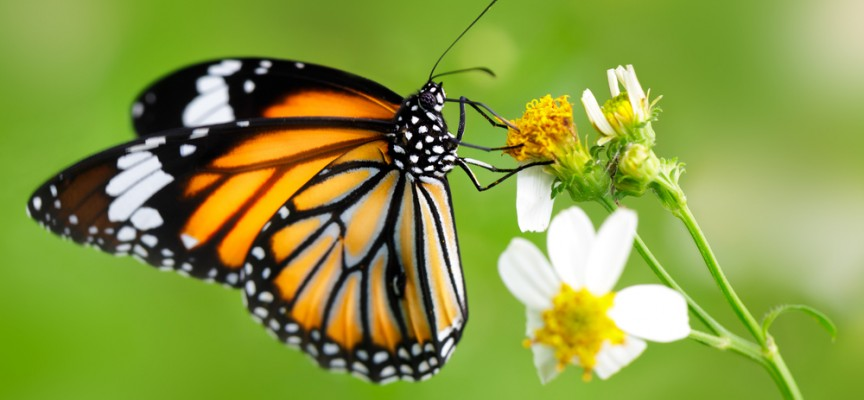 El mundo de la moda con los pacientes de Piel de Mariposa