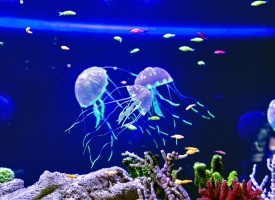 Cómo actuar frente a una picadura de medusa