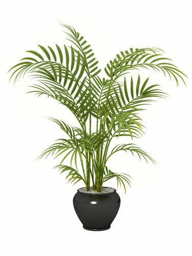 Plantas de interior para purificar el aire de tu casa knowi for Palmeras de interior