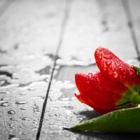 Estrés y melancolía, consecuencias del Día de San Valentín