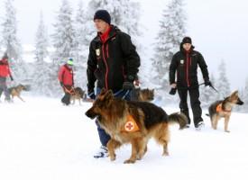Cómo sobrevivir a una avalancha