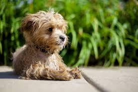 salvar vida mascota