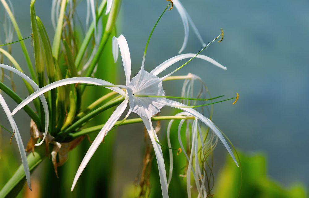 Plantas de interior para purificar el aire de tu casa knowi - Plantas de interior que purifican el aire ...
