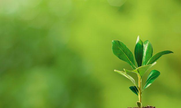 Pon una planta en tu vida
