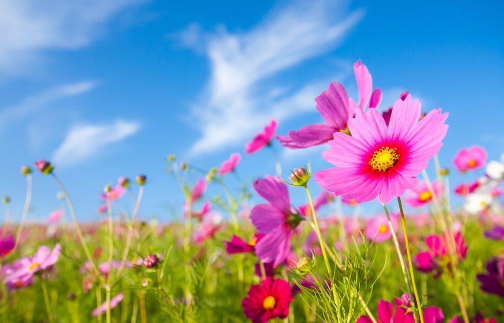 ¿Por qué salen las flores en primavera?