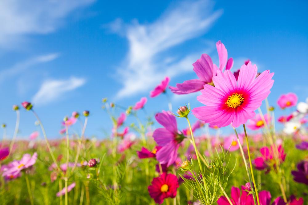 42. ¿Por qué salen las flores en primavera? -Knowi