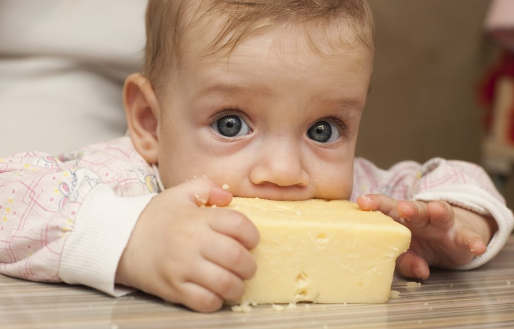 El queso, un manjar en la pirámide nutricional