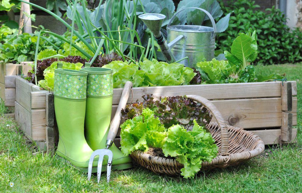 Las variedades de lechuga y sus propiedades antioxidantes