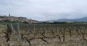 viñedos Briones2