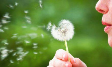 """Consejos para """"sobrevivir"""" al polen"""