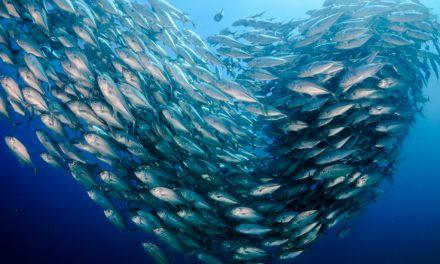 ¿Azul o blanco? 🐟 Qué pescado es mejor para la salud 🐟
