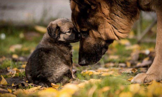 Cómo cuidar a tu cachorro ❤ Su salud lo más importante 🐶
